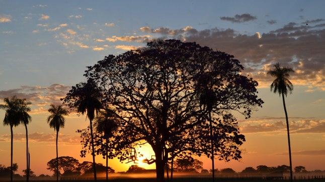 28 Pantanal